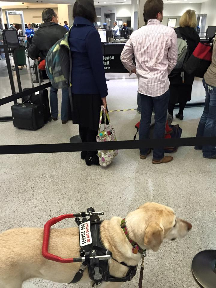 Can Dogs Ride On A Plane With You