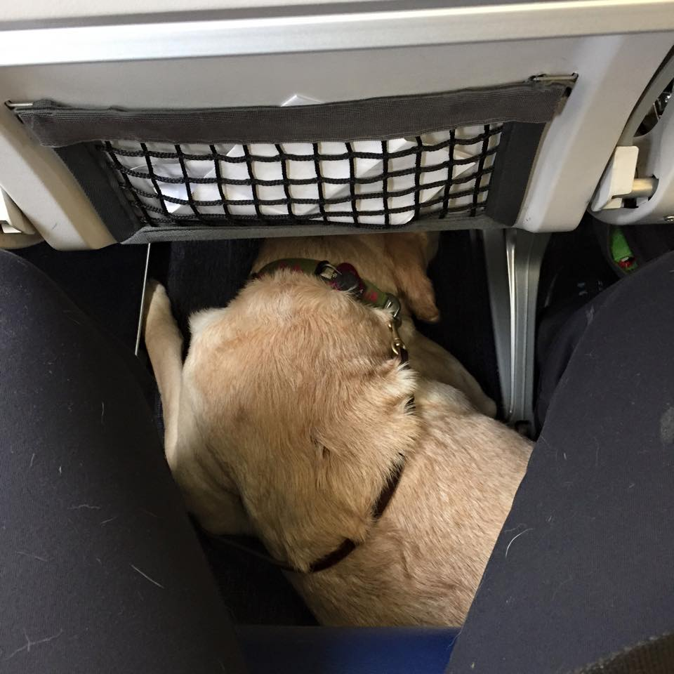 When dogs fly tips for flying with your service dog the for Small dogs on airplanes